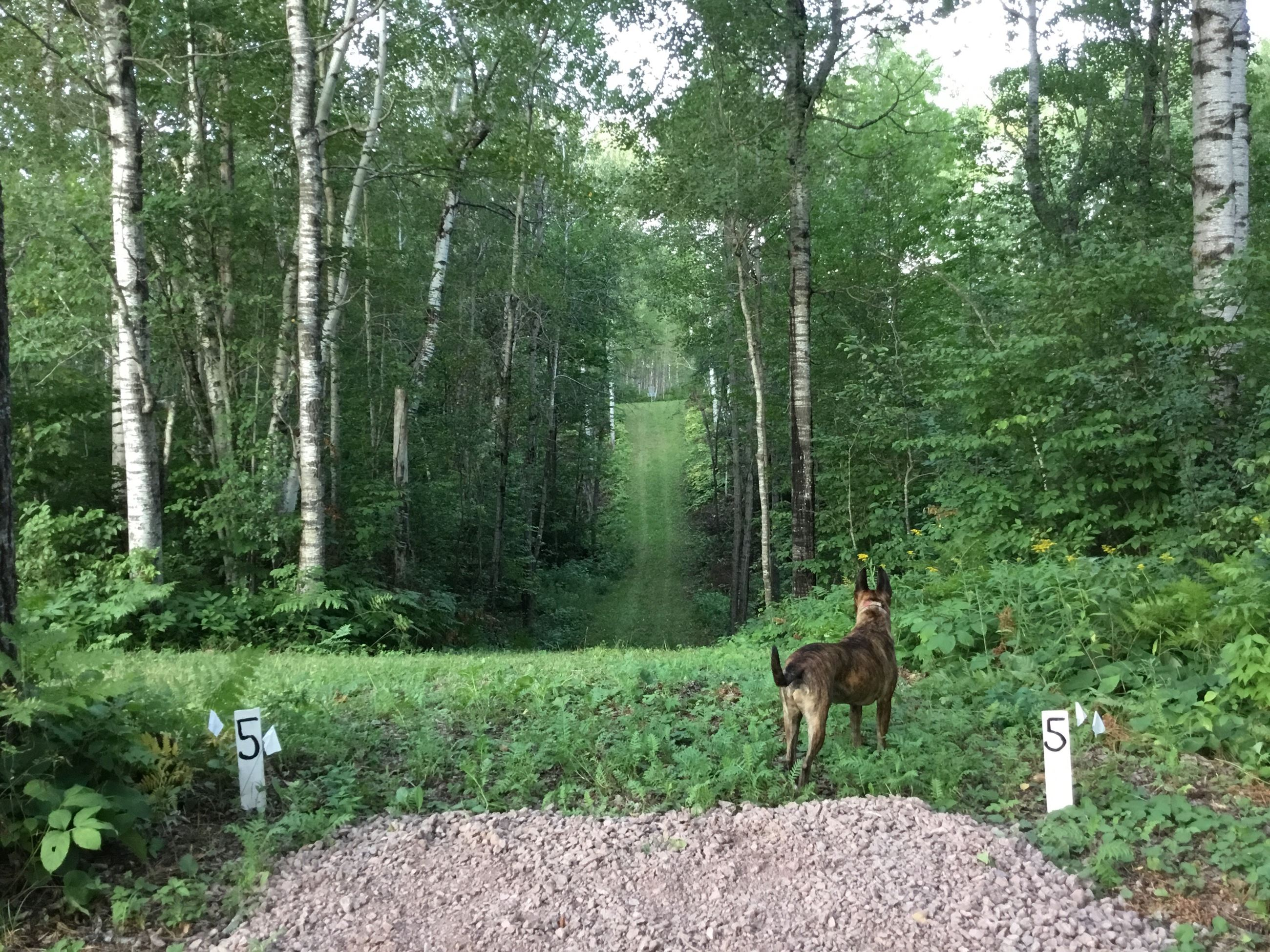 Disc Golf Courses Superior Wi Official Website